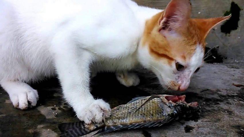 Berkat Menyelamatkan Kucing, Saya Selalu Dimurahkan Rezeki