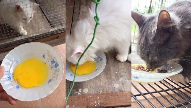 Cara Mudah Dan Murah Untuk Lebatkan Bulu Cik Meow Selain Tidak Mudah Gugur