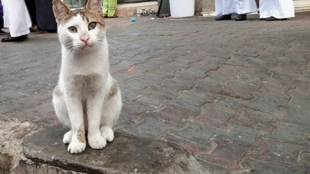 Kerap Beri Makan Kucing Jalanan Di Makkah Madinah Allah Bantu Dapatkan Tempat Solat Semuanya Jdt