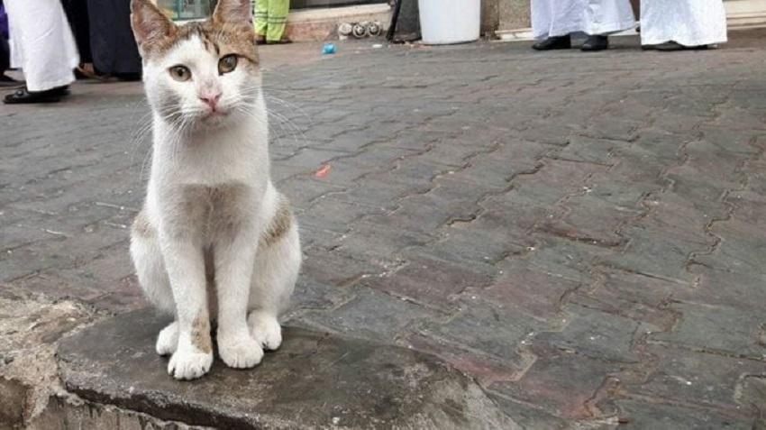 Kerap Beri Makan Kucing Jalanan Di Makkah Madinah Allah Bantu