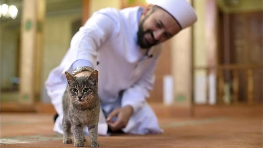 Nampak Remeh,Tapi Inilah Hukum Dosa Memelihara Kucing Yang Mengejutkan